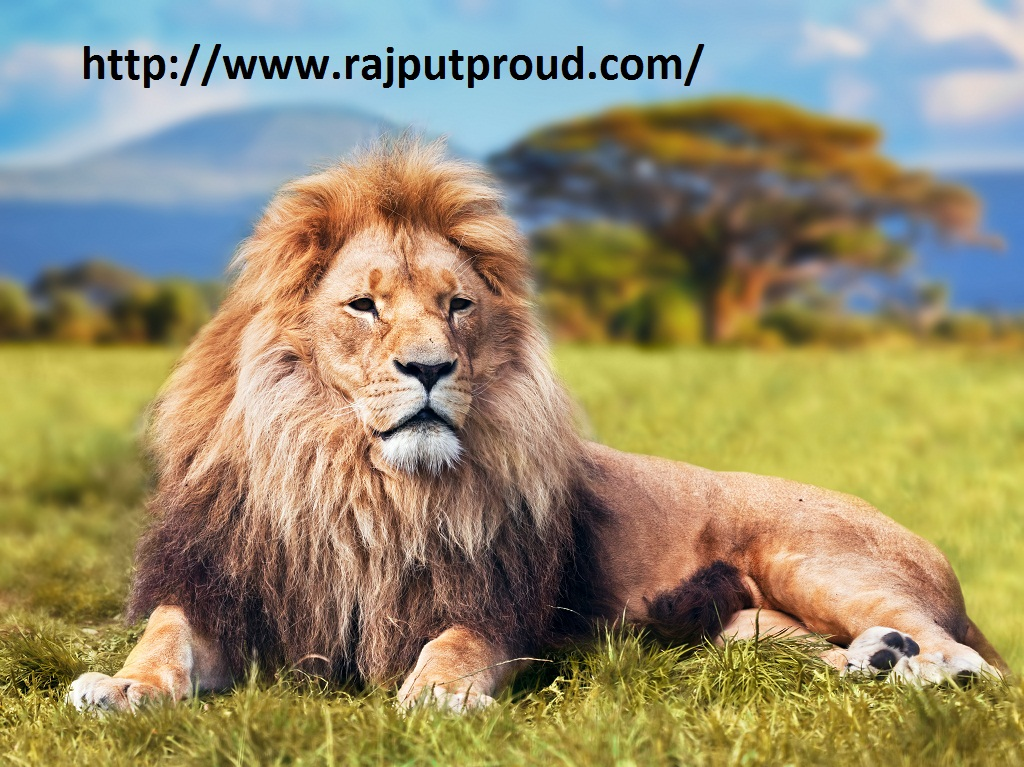 Rajputana Whatsapp Status Archives Rajput Proud